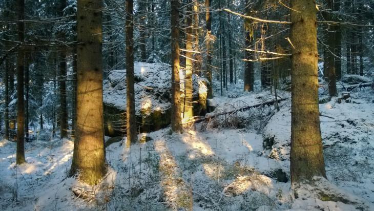 Metsämaisemaa, jossa ohut lumikerros puiden ja kivien päällä.